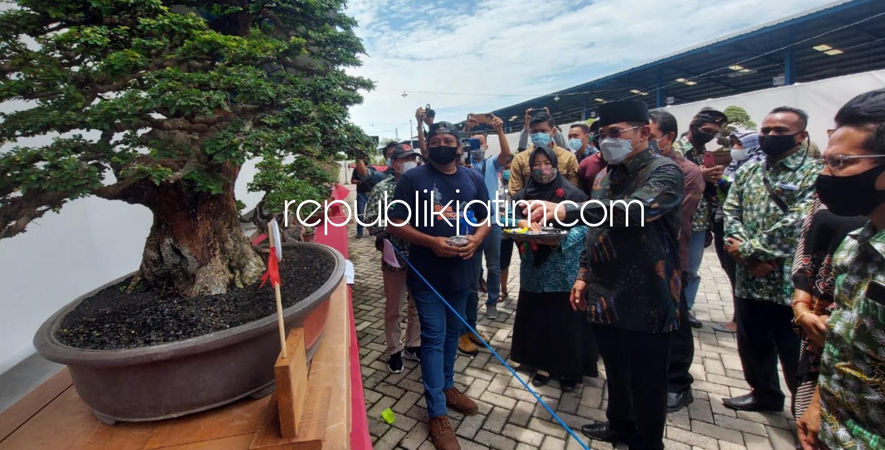 Bisnis Tanaman Bonsai Raup Puluhan Hingga Ratusan Juta Rupiah di Tengah Pandemi Covid-19