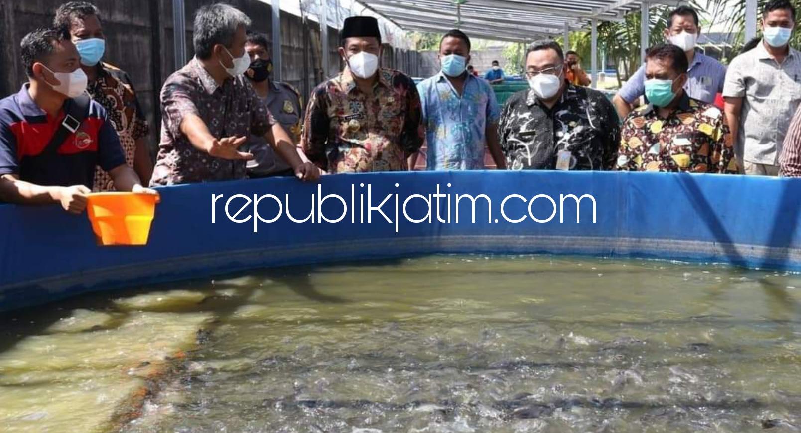 Pulihkan Perekonomian Selama Pandemi Covid-19, Puluhan Warga Sidoarjo Dilatih Budidaya Lele di Kolam Terpal