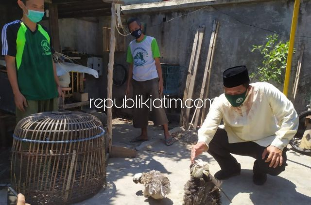 Punya Prospek dan Pertahankan Budaya, BHS Siap Kembangkan Peternakan Ayam Hias di Sidoarjo