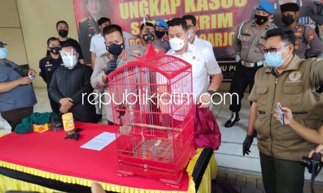 Polresta Sidoarjo Ringkus Perdagangan Burung Ilegal Dilindungi Asal Papua